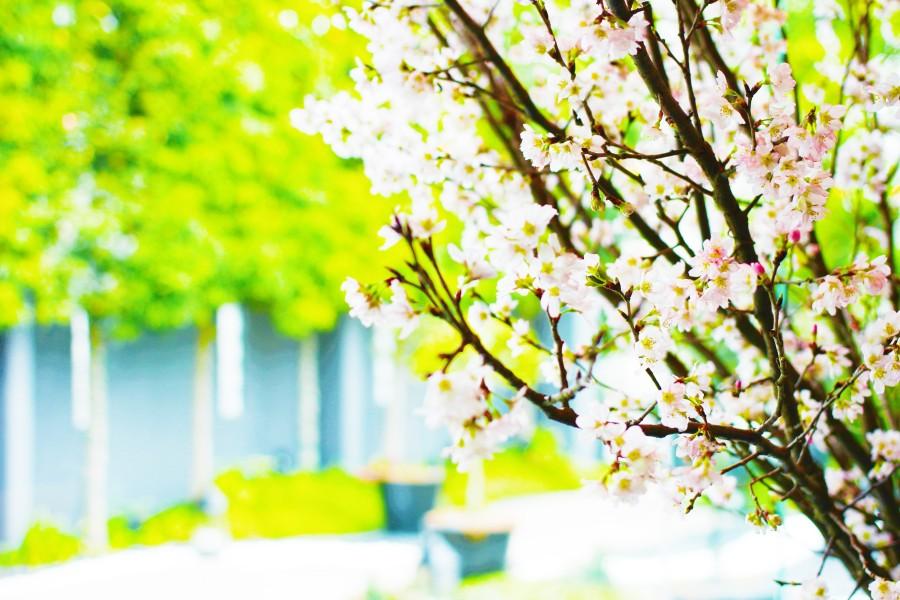 春の祝入学フェア♪お庭の見える個室でゆっくりと御会食